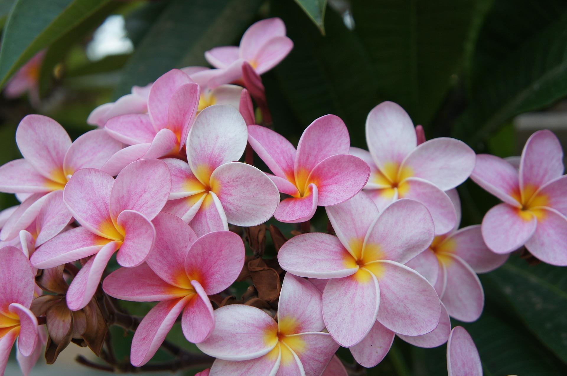 flower-534494_1920